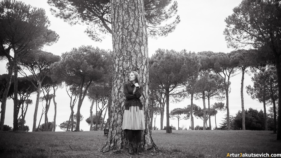Pine tree in Rome
