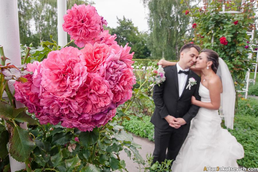 Prague rose park