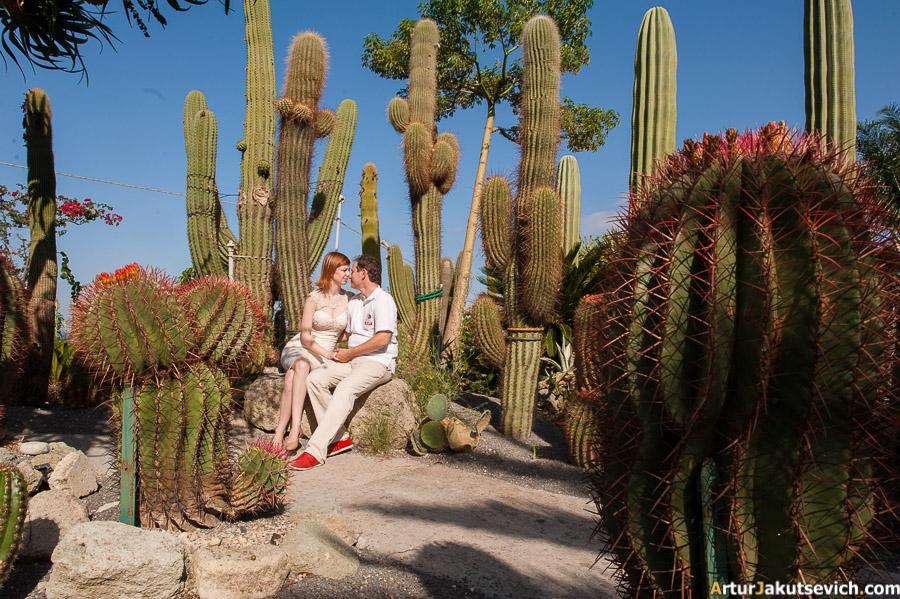 Famous botanic garden in Ischia