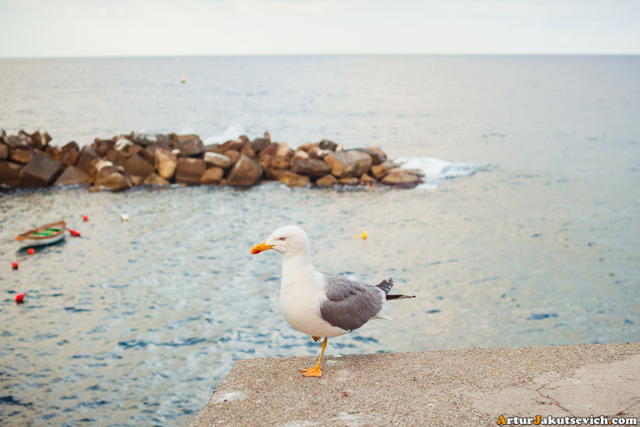 Riomaggiore sea