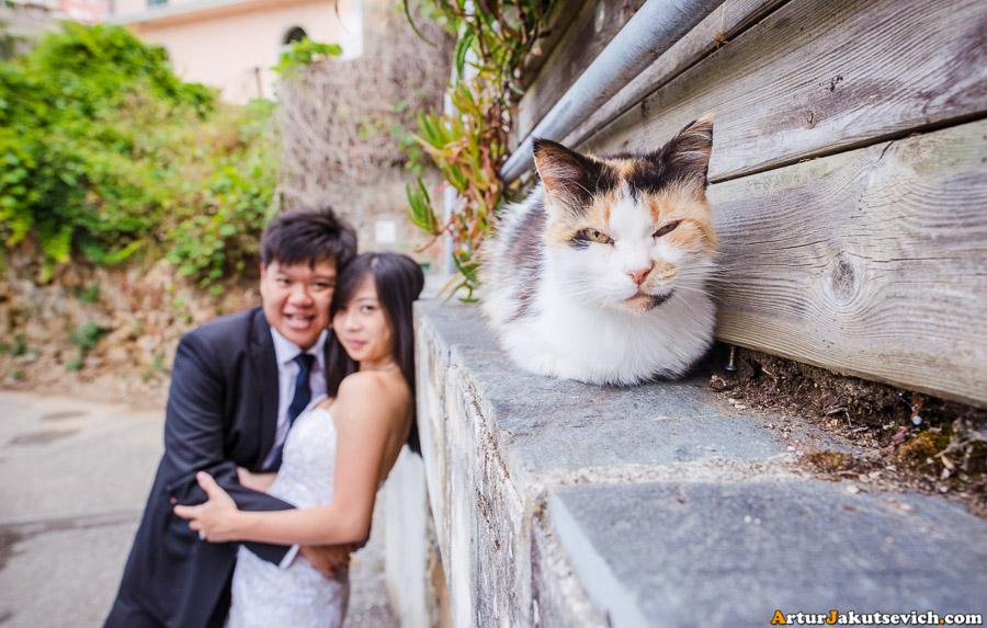 Cats in Riomaggiore